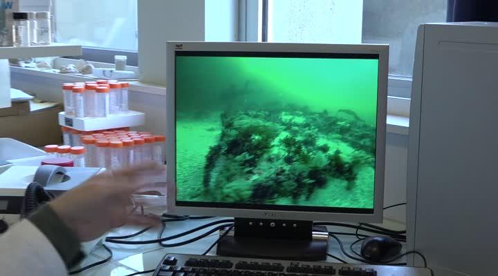 Thumbnail EMR : un homard breton très au courant