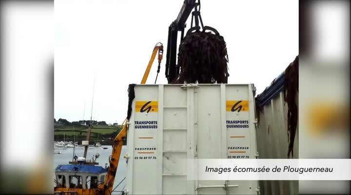 Thumbnail L'histoire et les enjeux de la filière algue en Finistère