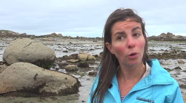 Thumbnail Les herbiers zostères à préserver en Baie de Morlaix
