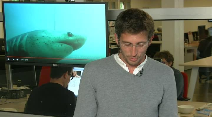Thumbnail Des requins dans les eaux bretonnes !