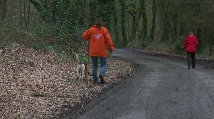 Thumbnail SPA : les chiens de chasse en manque d'amour