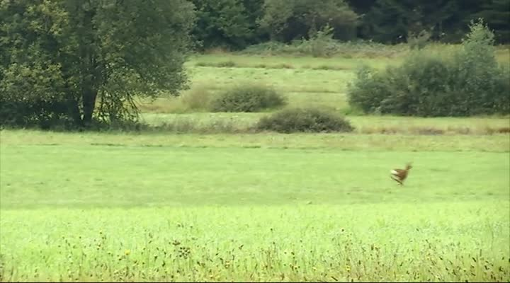 Thumbnail Ouverture de la chasse ce week-end Finistère