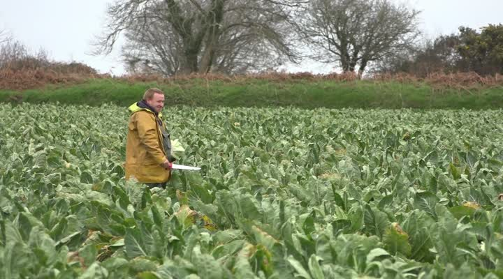 Thumbnail Chambres d'agriculture : les syndicats font campagne