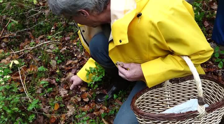 Thumbnail En forêt pour découvrir les champignons