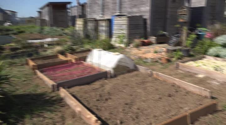 Thumbnail Les jardins familiaux poussent sans pesticide