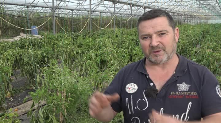 Thumbnail Les fruits et légumes issus de semences paysannes en vente chez Carrefour