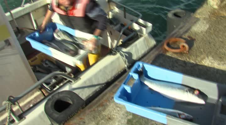 Thumbnail Brexit : les acteurs bretons de la pêche inquiets