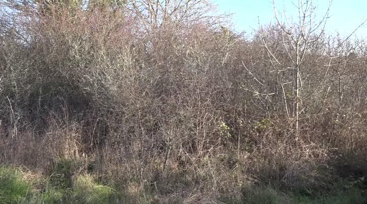 Thumbnail À la reconquête des terres agricoles abandonnées en Finistère