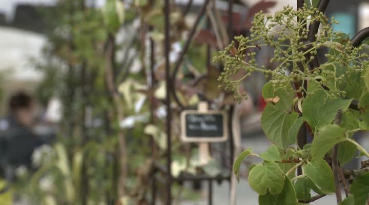 Thumbnail Vannes : les jardins éphémères verdissent la ville !