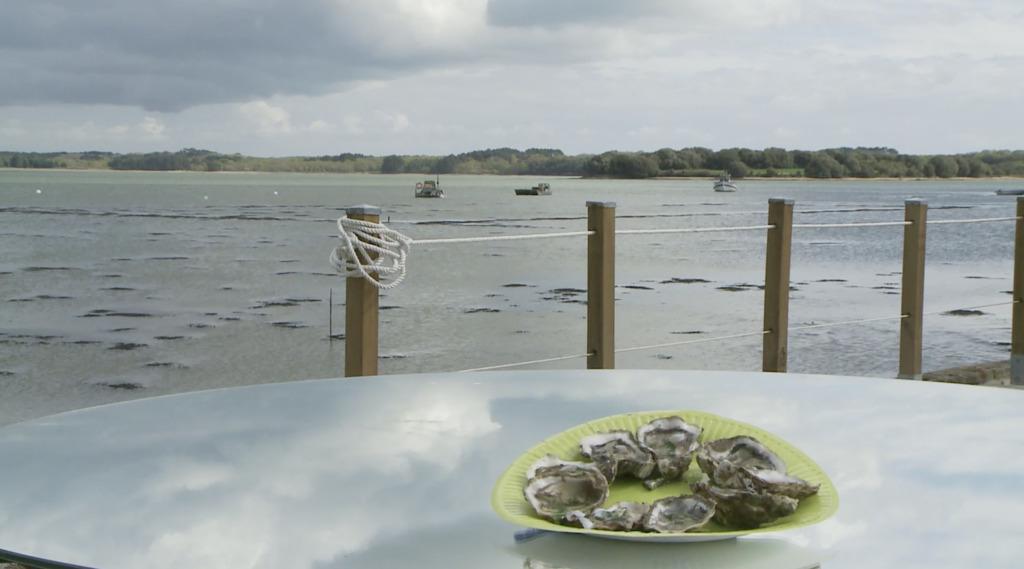 Thumbnail Huitres à la spiruline marine : de l'iode plein les papilles