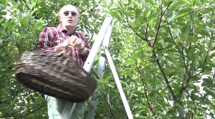 Thumbnail Pommiers Francs. Un passionné patient créateur de nouvelles espèces de pommes