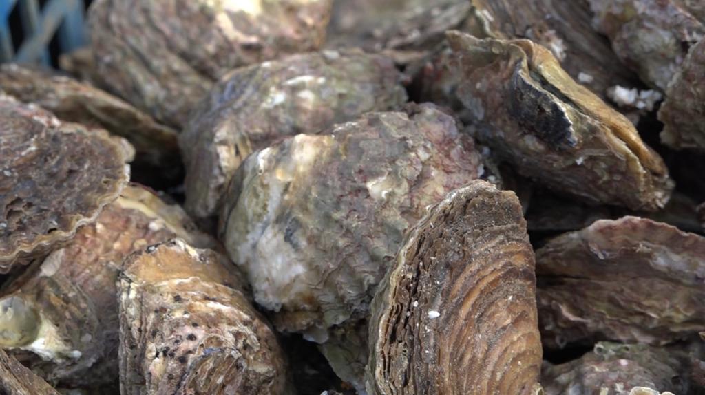 Thumbnail Les huîtres frappées par la gastro