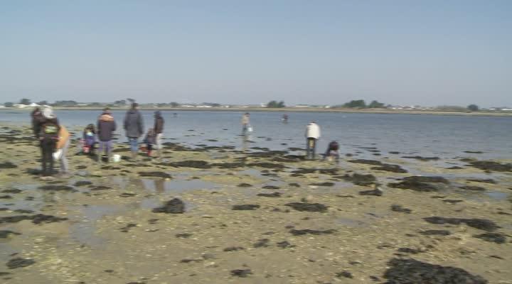Thumbnail Pêche aux palourdes : à la cuillère et en breton !