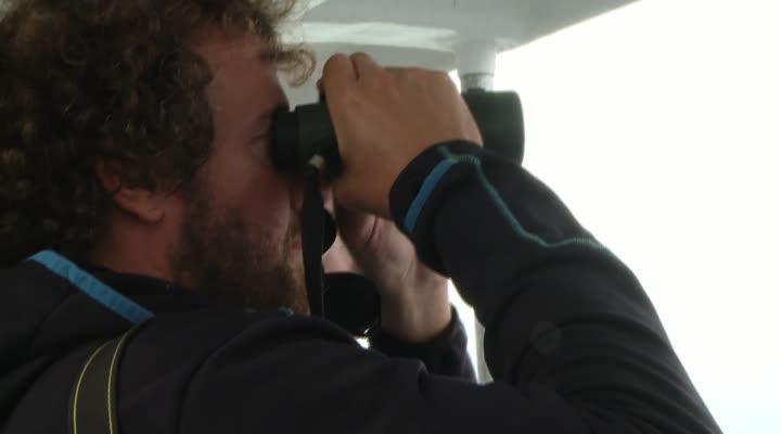 Thumbnail Instant été : rencontre avec les dauphins et oiseaux du Morbihan Braz